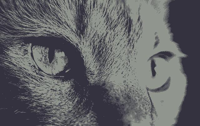 Kedilerin Gözünden Dünyaya Bakış