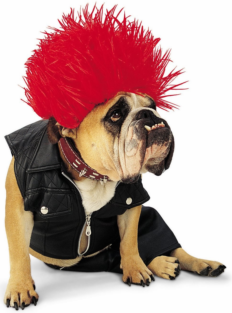 Dewback Pet Costume |Pet Halloween Coustumes