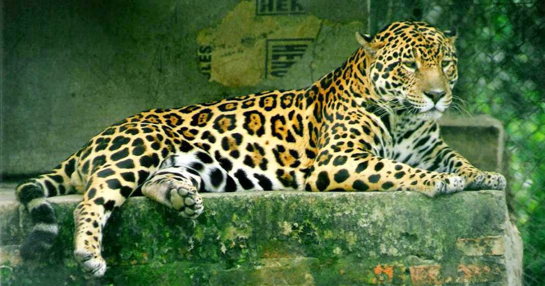 Reino animal en biologia