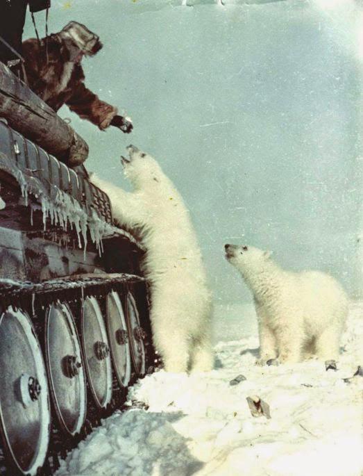 La alimentación de los osos polares del tanque, 1950