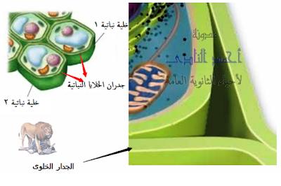 آليات المناعة التركيبية ( خط الدفاع الأول ) - تراكيب موجودة سلفاً فى النبات - الخدار الخلوى
