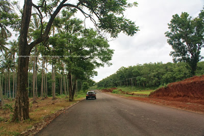 Pohon pelindung di pinggir jalan yang membuat nyaman