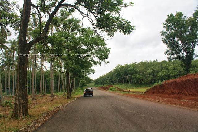 Jalan antara Cipatujah-Pemeungpeuk, sepi banget, jalan serasa jalan tol dan milik sendiri hehehe ...