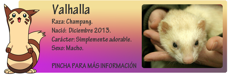 http://almaexoticos.blogspot.com.es/2014/12/valhalla-huron-adorable-en-adopcion.html