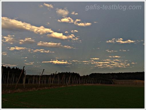 Hopfengärten in den Abendsonnenstrahlen
