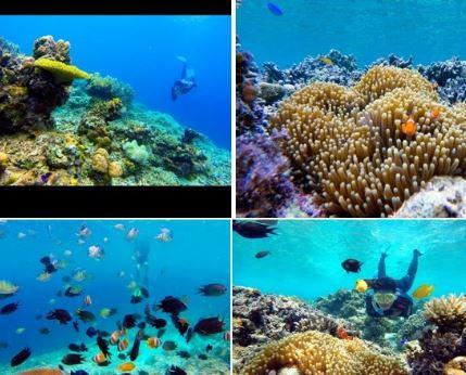 Terumbu Karang Keindahan Bawah Laut Pulau Karampuang