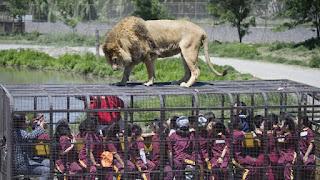 Zoologico Parque Safari de Chile, animales sueltos