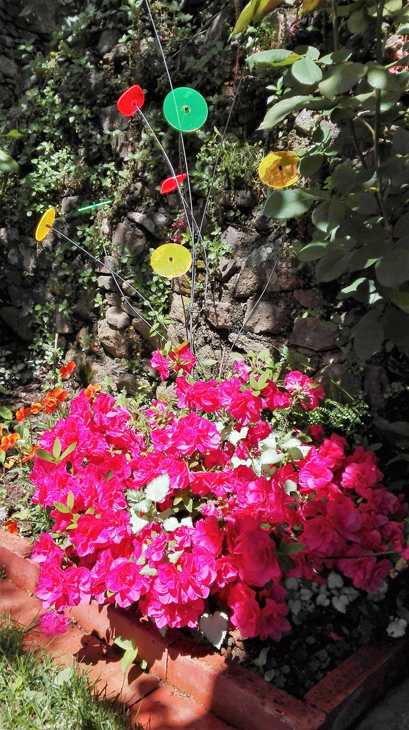 Cazador del sol mettez de la lumi re dans votre jardin for Arbuste en anglais