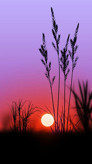 Sunset Wallpaper Flash Plus 2