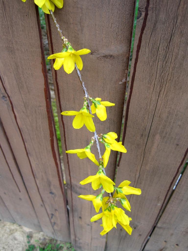 Sweet Bee Buzzings March 2012