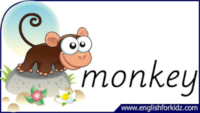 monkey flashcard