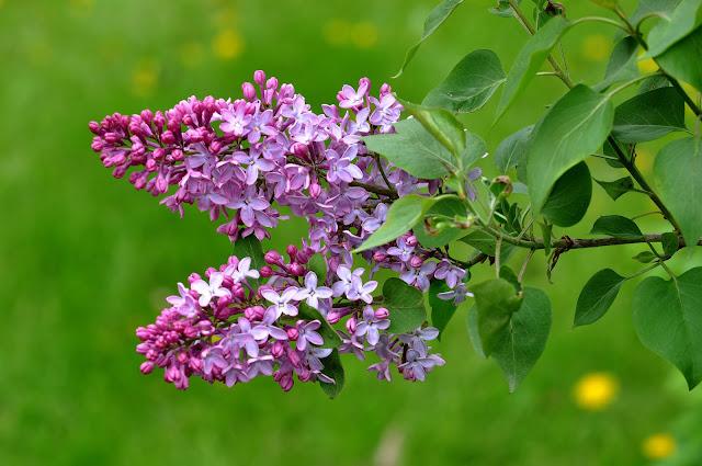 Весенние приметы и суеверия, Крестьянские поговорки о весне, Приметы весны о лете, весна, весенние приметы, приметы и суеверия, приметы о весне, приметы народные, мудрость народная, приметы весны о лете, поверья народные, календарь народный, снег весной, погода весной, про весну, про весенние месяцы, про календарь, про апрель, про май, про март, март, апрель, май, приметы на март, приметы на апрель, приметы на май, приметы народные, календарь народный, календарь примет, http://prazdnichnymir.ru/,Весенний народный календарь,, народный календарь примет и традиций, весенний календарь, весенний народный календарь, весенние славянские праздники, про весну, весеннее, календарное, народные приметы и суеверия, приметы о природе, приметы о погоде, славянские верования, славянские традиции, наблюдения за природой, наблюдения за погодой, народный календарь на 2020 год, народный календарь на 2021 год, календарь народных праздников на каждый день, народный календарь славян, народный календарь на весну, календарь народных примет, приметы весны, приметы марта, приметы апреля, приметы мая, приметы на март народные, приметы народные на апрель, приметы народные на май,Весенние приметы и суеверия, Крестьянские поговорки о весне, Приметы весны о лете, весна, весенние приметы, приметы и суеверия, приметы о весне, приметы народные, мудрость народная, приметы весны о лете, поверья народные, календарь народный, снег весной, погода весной, про весну, про весенние месяцы, про календарь, про апрель, про май, про март, март, апрель, май, приметы на март, приметы на апрель, приметы на май, приметы народные, календарь народный, календарь примет, http://prazdnichnymir.ru/,Весенний народный календарь,