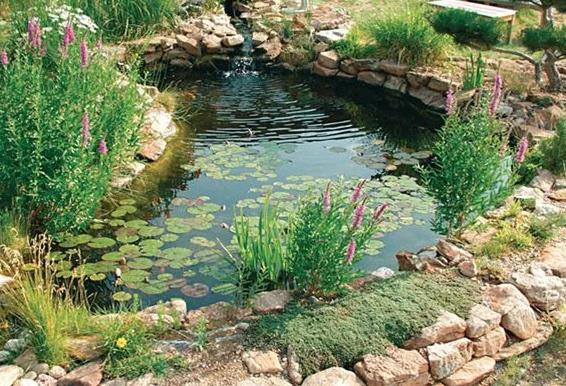 taman rumah dengan Kolam ikan dengan dikelilingi tanaman