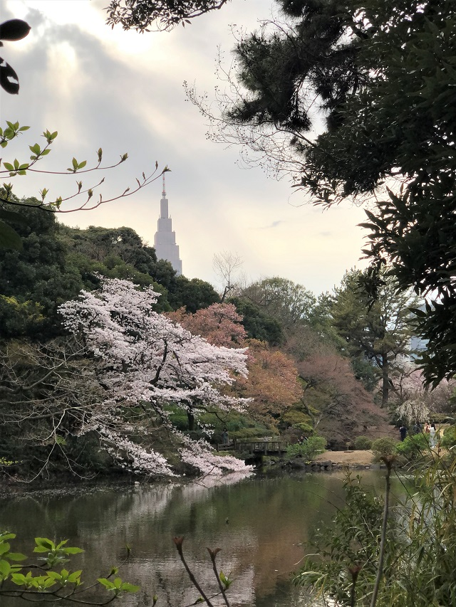 Shinjuku Gyoen National Park