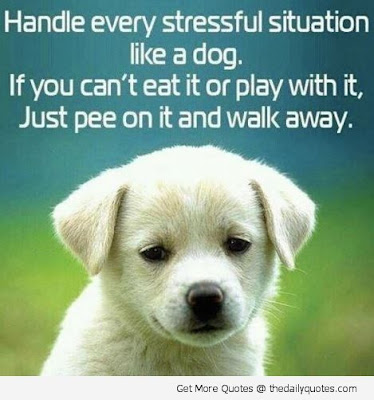 quotes: handle every stressful situation like a dog.