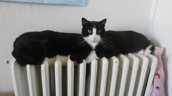 Длинный кот? А нет, показалось