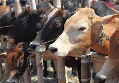 UP To Have Cow Protection Committees in All Districts