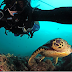 Make Money from Underwater Photography?