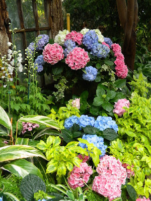 Spring container with Florist hydrangeas at the Centennial Park Conservatory 2018 Easter Flower Show by garden muses-not another Toronto gardening blog