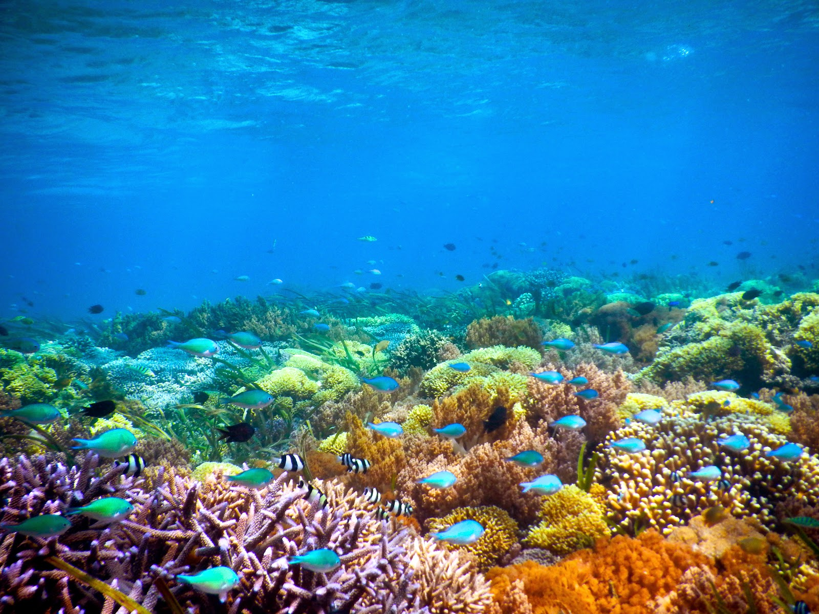Diving at Gili Kondo Lombok Timur Indonesia