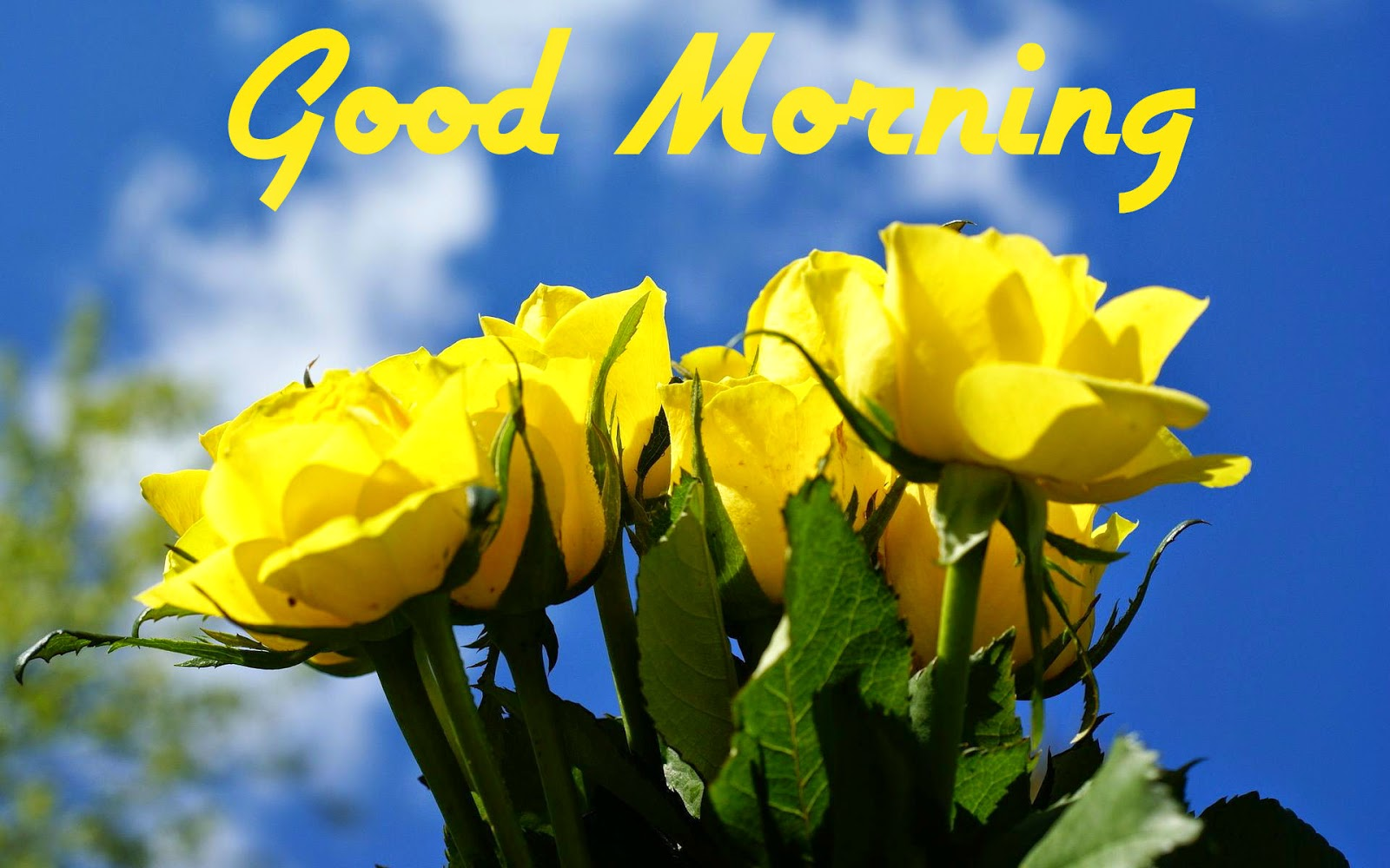 Good Morning With Beautiful Yellow Flowers