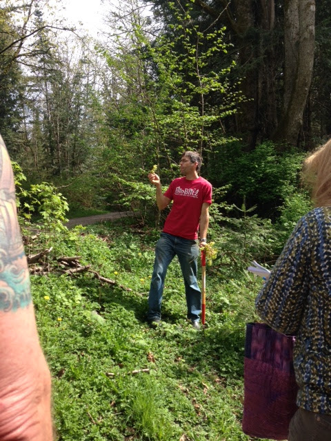 Abe Lloyd eating maple blossoms at Chuckanut Center April 2016