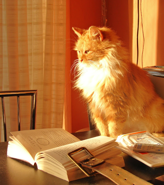 Book cat by raider of gin from flickr (CC-BY)