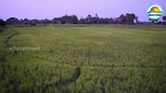 Severe drought in Mannar
