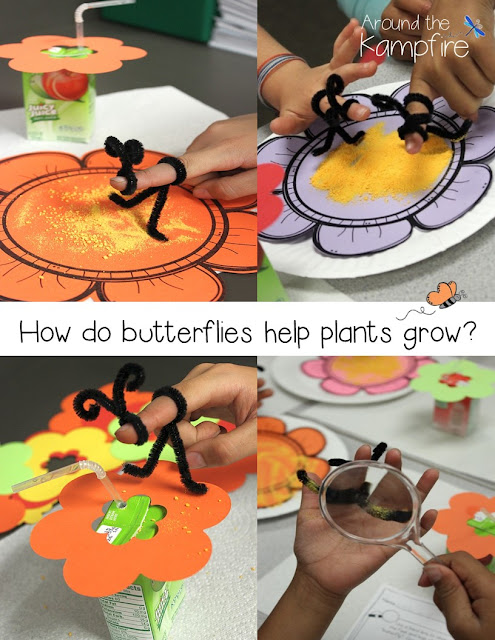 Butterfly science activities~Exploring how butterflies help plants grow.