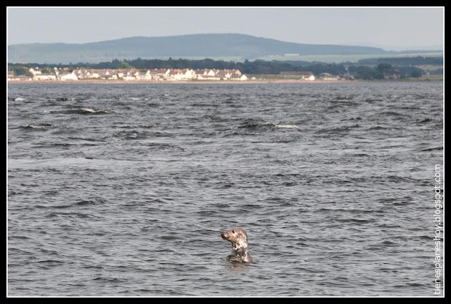 Chanorny Point (Escocia)