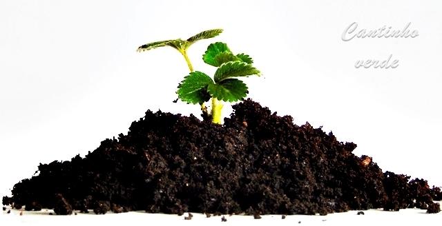 Carências nutricionais das plantas, conheça os sintomas