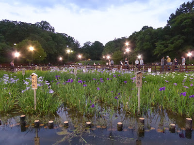 山田池公園・花しょうぶ園のライトアップ
