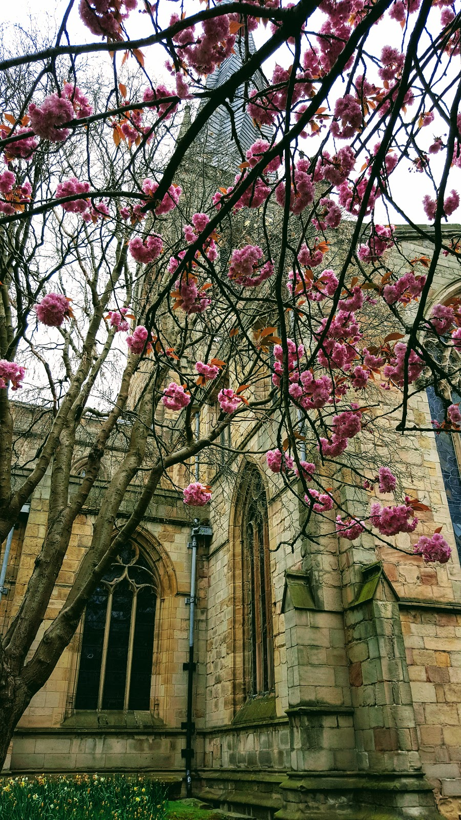 Chesterfield Crooked Spire Spring Bloom: Wednesday Blog Hop