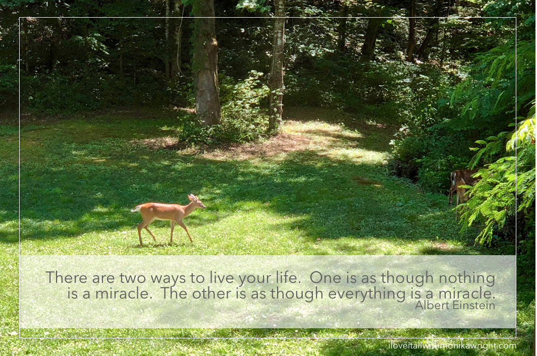 #life #albert einstein #deer #buck #nature #wildlife #smoky mountains #sunday photos #miracle #miracles #ways to live your life