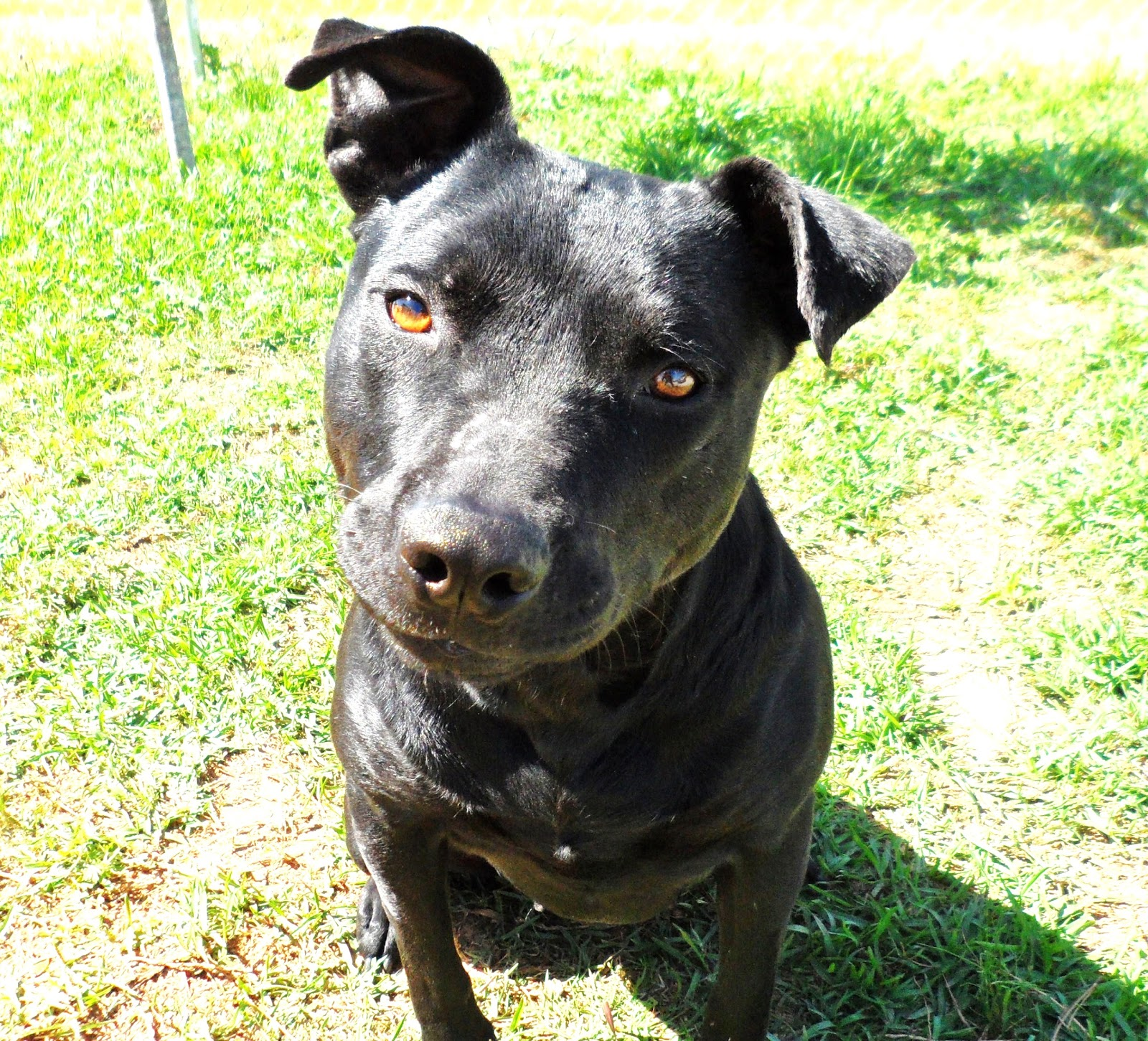 Lucky Dog Rescue Blog: Just Another Black Dog
