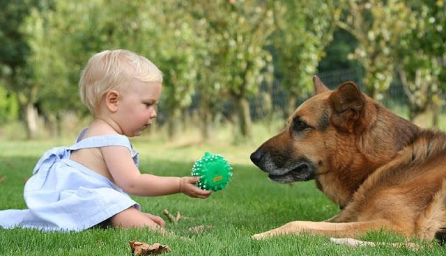 bayi lucu memberikan hadiah kepada anjing peliharaannya