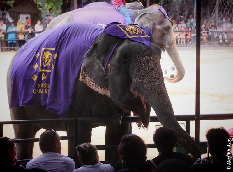 Слон Нонг Нуч