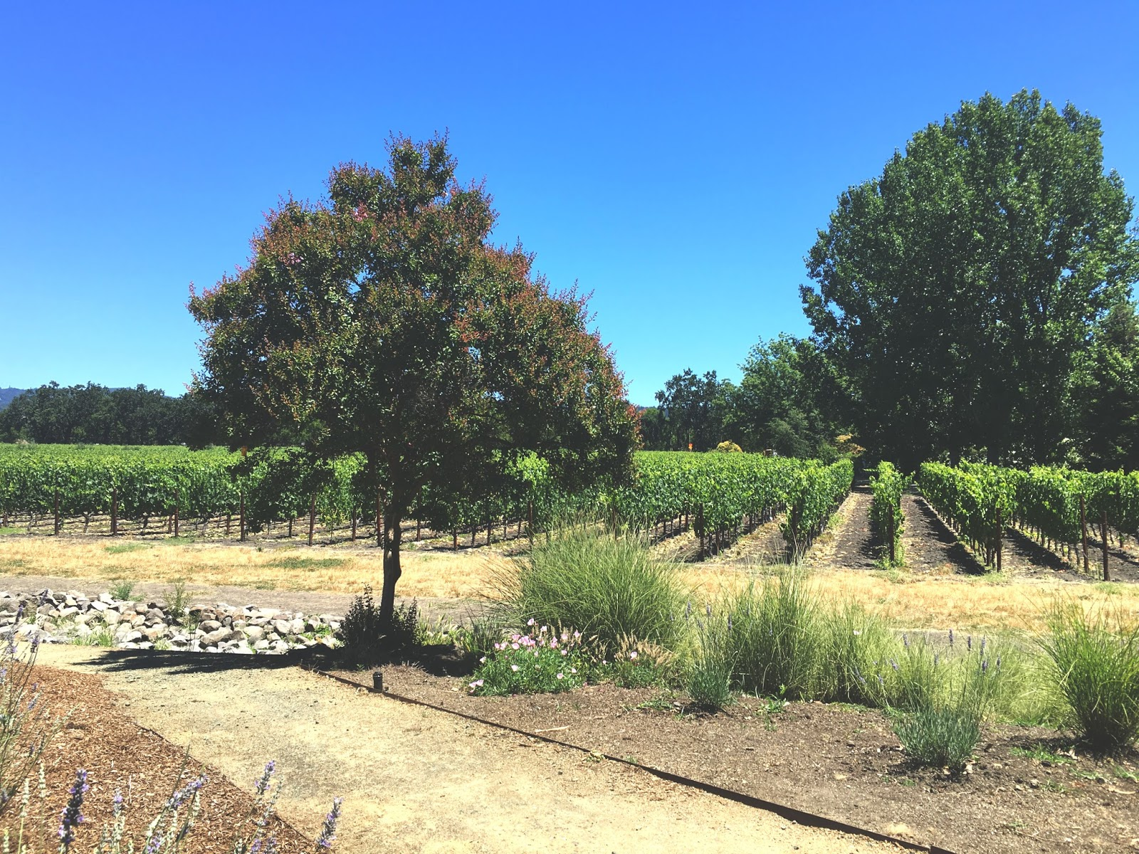 Rutherford Grove Winery in Napa, California
