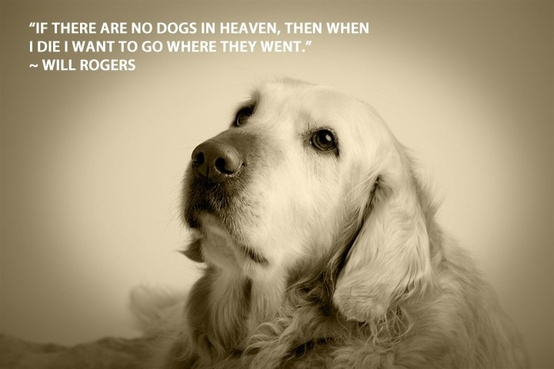 Funny Wallpapers: Dog quotes, dog quote, famous dog quotes