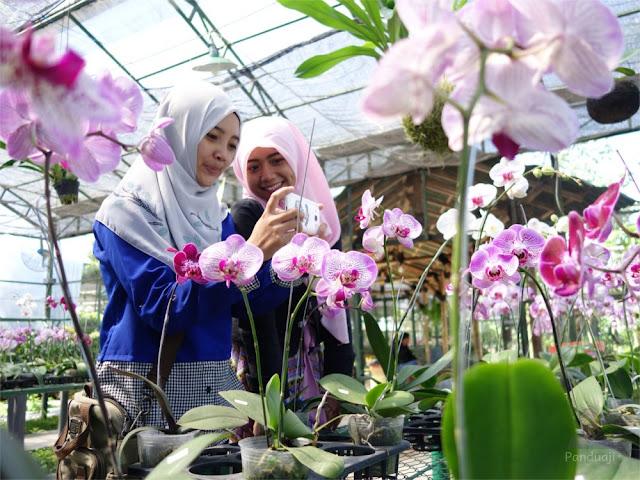 Foto Greenhouse Kampung Anggrek Kediri