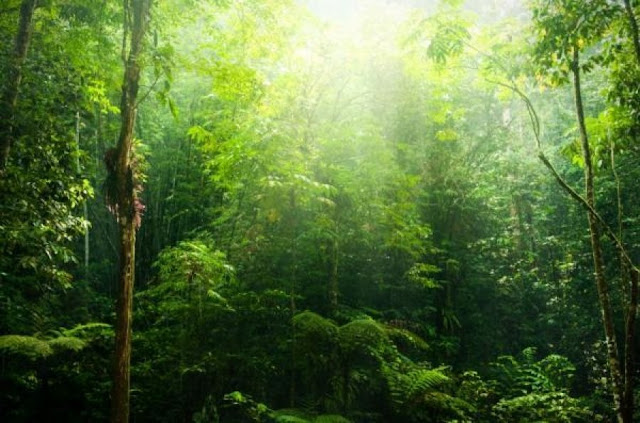 New measurements show widespread forest loss has reversed the role of tropics as a carbon sink