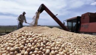 Monsanto, que enfrenta la resistencia civil para instalar una planta de transgénicos en la provincia de Córdoba y las demandas de organizaciones campesinas por su preponderancia en los mercados, ahora tendrá enfrente también la decisión jurídica que la deja sin títulos de propiedad sobre semillas que consideraba propias.