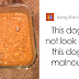Woman Shares Pictures Of Her Labrador's Vegan Dinner And Gets An Epic Reply From A Veterinarian