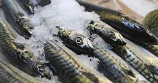 فوائد السمك للصحه وقيمتها الغذائيه