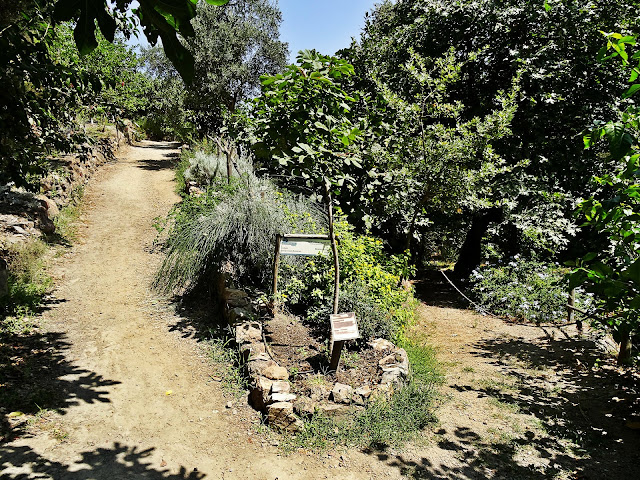 Omalos ogród botaniczny co warto zobaczyć na Krecie?