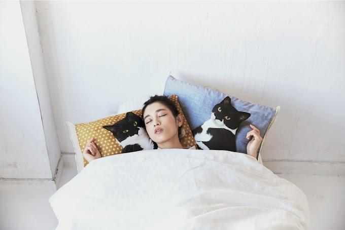 【貓奴大愛】日本網絡紅貓Gizmo枕頭套裝 人氣上市
