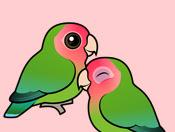 Tips jitu Menjodohkan Burung Lovebird