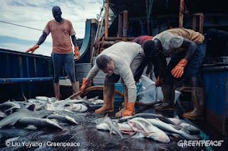 explotación de la industria pesquera china en África