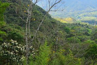 white flowering tree in valley