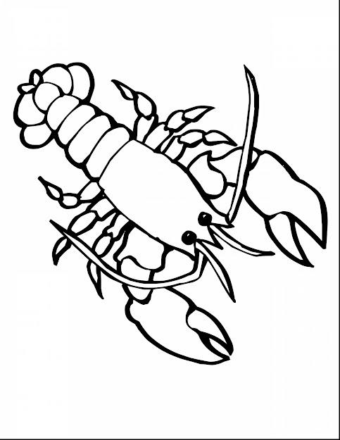 Impressive Lobster Sea Animals Coloring Pages Printable With Sea Animals  Coloring Pages And Baby Sea Animals